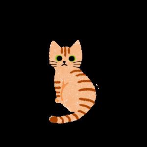 がさがさタッチふりむく猫1茶トラ