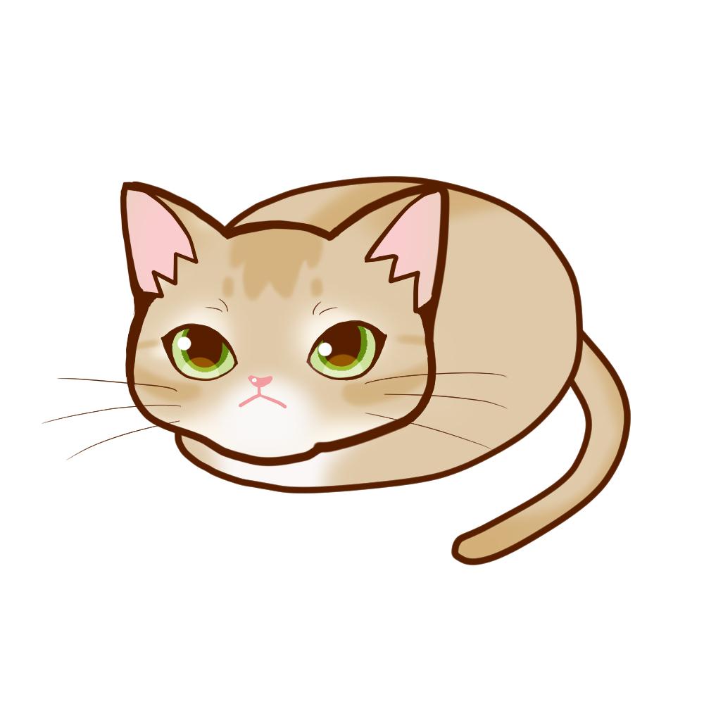まんじゅうアビフォーン全身A-Manju cat aby fawn whole body A-