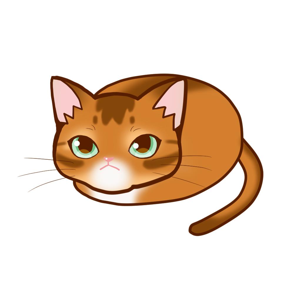 まんじゅうアビレッド全身A-Manju cat aby red whole body A-