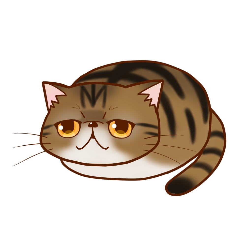 まんじゅうエキゾチック ブラウンマッカレルタビー全身A-Manjyu cat exotic-browntabby whole body A-