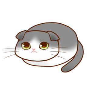 まんじゅうスコブルー&ホワイト全身A-Manjyu cat sco-blue-white whole body A-