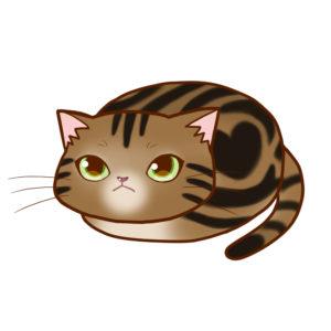 まんじゅうアメショブラウンタビー全身A-Manju cat amesho browntabby whole body A-