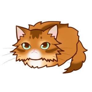 まんじゅうソマリレッド全身A-Manjyu cat somali-red whole body A-
