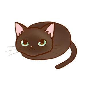 まんじゅうバーミーズ全身A-Manju cat burmese whole body A-