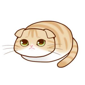 まんじゅうスコクリームタビー&ホワイト全身A-Manjyu cat sco-cream-white whole body A-
