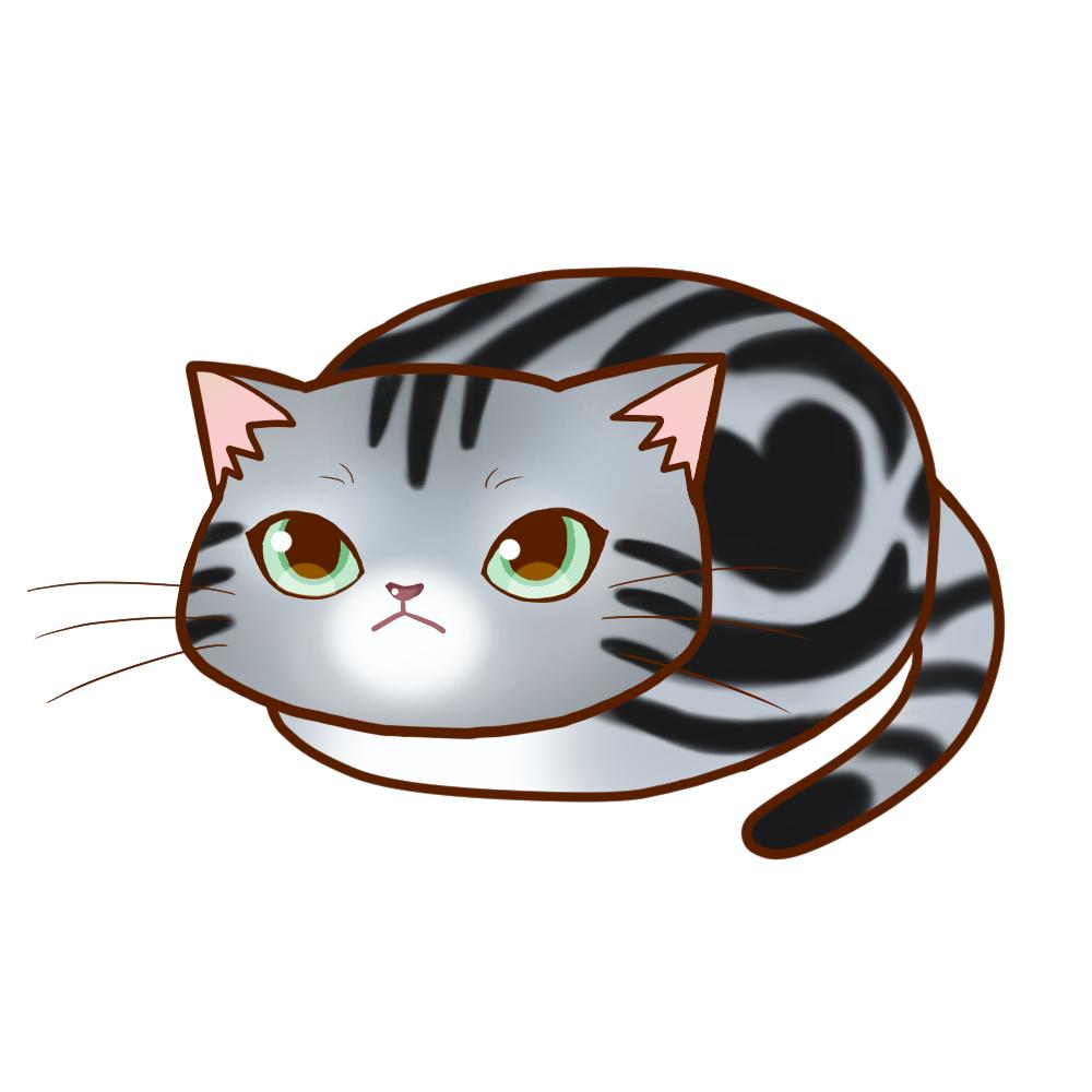 まんじゅうアメショシルバータビー全身A-Manju cat amesho silvertabby whole body A-