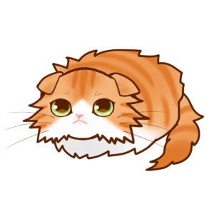 まんじゅうスコロングレッドタビー&ホワイト全身A-Manjyu cat sco-long-redtabby-white whole body A-