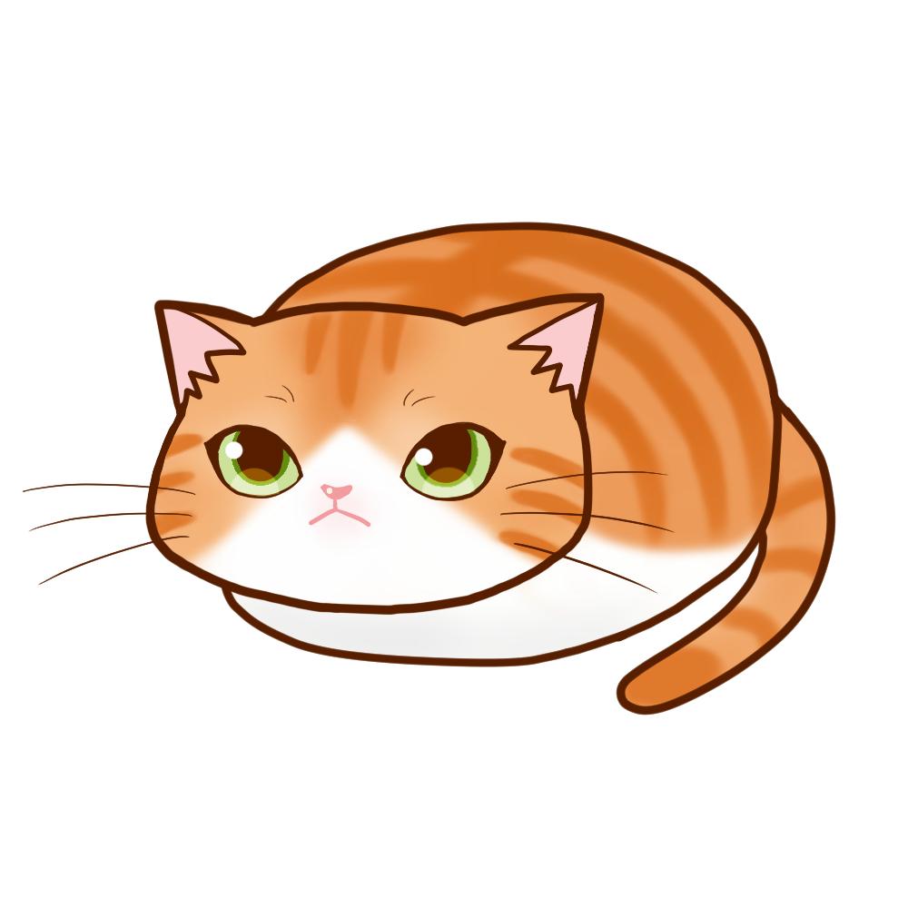 まんじゅう茶白全身A-Manju cat redtabby&white whole body A-