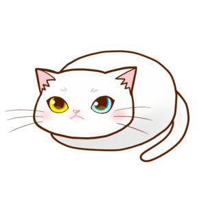 まんじゅう白全身A-Manju cat Whole Body A-