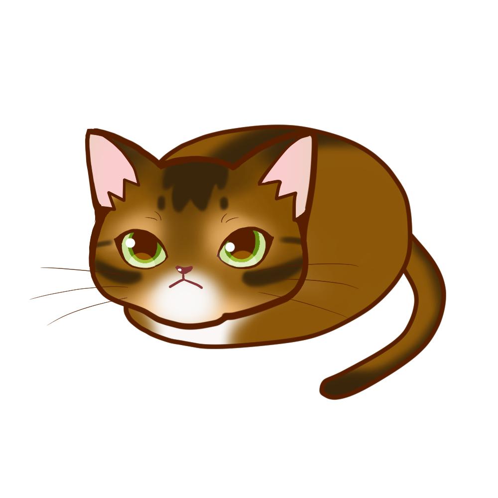 まんじゅうアビルディ全身A-Manju cat aby ruddy whole body A-