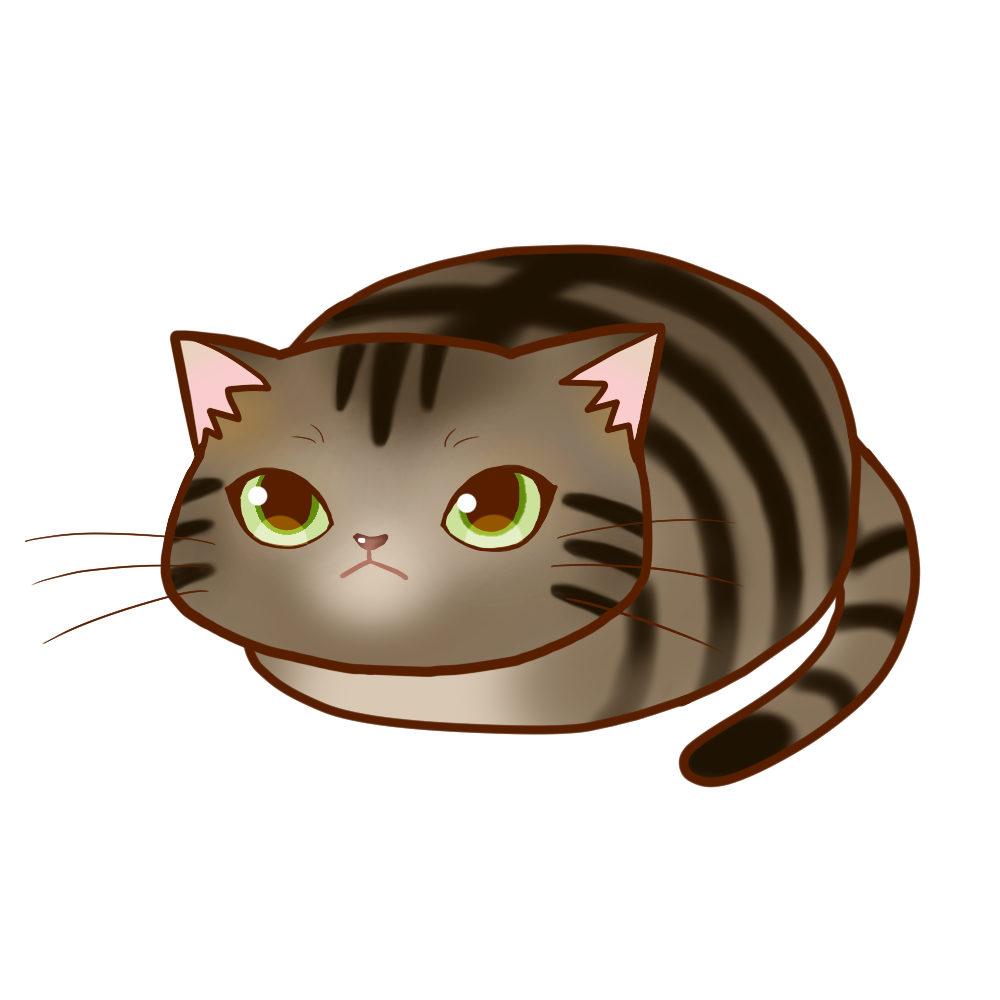 まんじゅうキジトラ全身A-Manju cat kijitora whole body A-