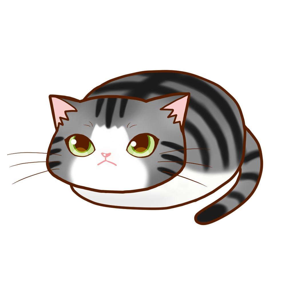 まんじゅうサバ白全身A-Manju cat sabashiro whole body A-