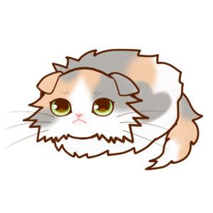 まんじゅうスコロングダイリュートキャリコ全身A-Manjyu cat sco-long-dilute-calico whole body A-