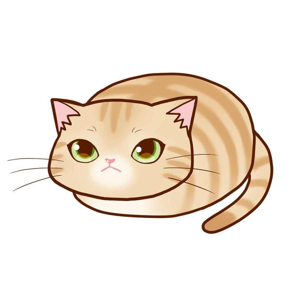 まんじゅうクリーム 全身A-Manju cat creamtabby whole body A-