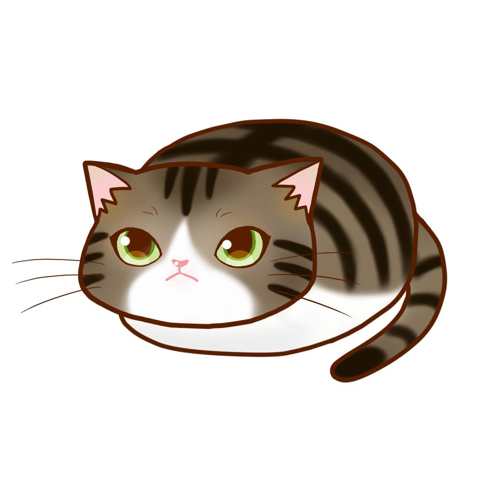 まんじゅうキジ白全身A-Manju cat kijishiro whole body A-
