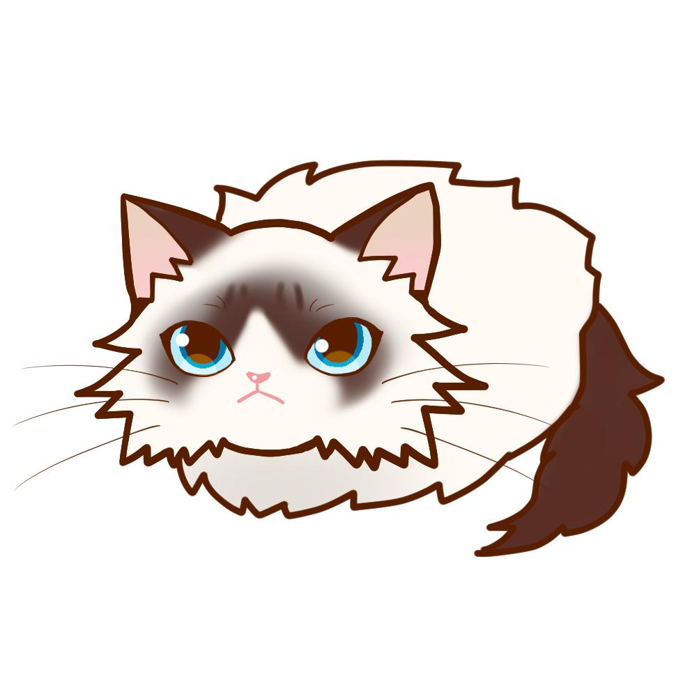 まんじゅうラグドール全身A-Manju cat ragdoll whole body A-