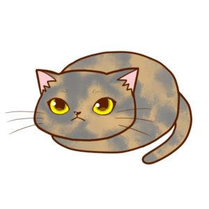 まんじゅうサビダイリュート全身A-Manju cat sabi dilute whole body A-