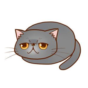 まんじゅうエキゾチックブルー全身A-Manjyu cat exotic-blue whole body A-