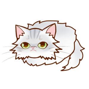 まんじゅうペルシャチンチラシルバー全身A-Manjyu cat persian-chinchilla-silver whole body A-