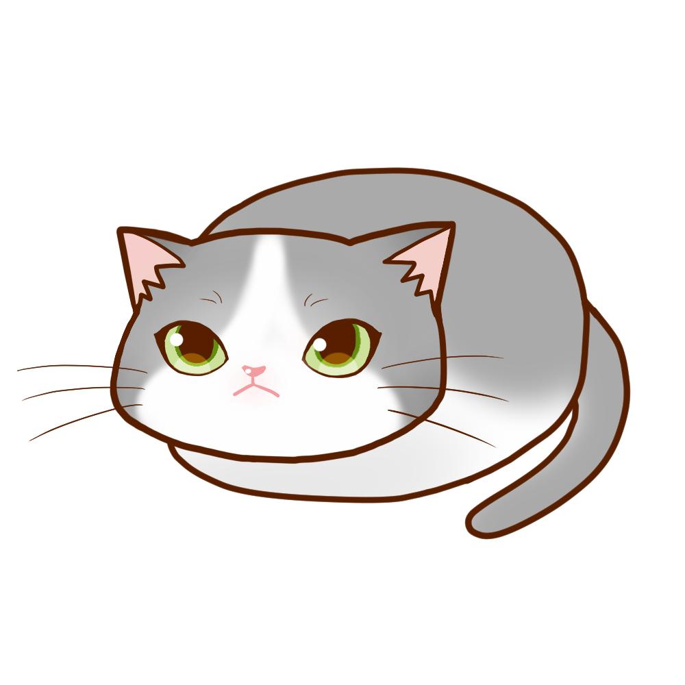 まんじゅうグレー白全身A-Manjyu cat gray white whole body A-