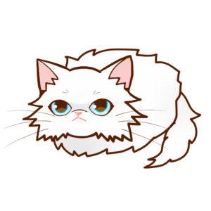 まんじゅうペルシャホワイトソリッド全身A-Manjyu cat persian-whitesolid whole body A-