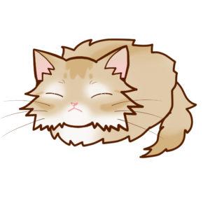 まんじゅうソマリフォーン全身B-Manjyu cat somali-fawn whole body B-