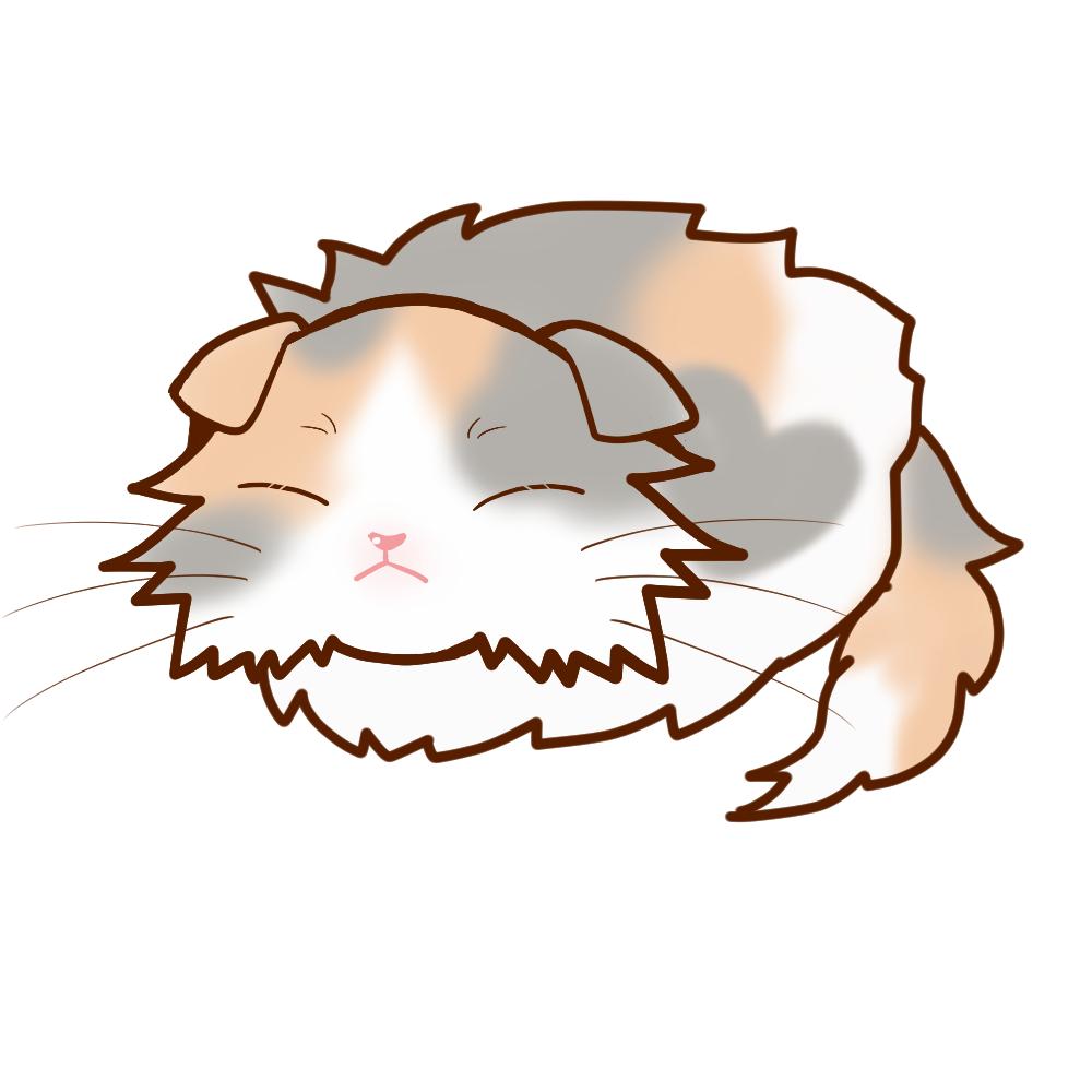 まんじゅうスコロングダイリュートキャリコ全身B-Manjyu cat sco-long-dilute-calico whole body B-