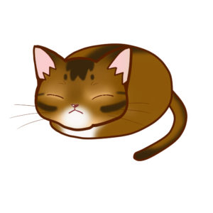 まんじゅうアビルディ全身B-Manju cat aby ruddy whole body B-