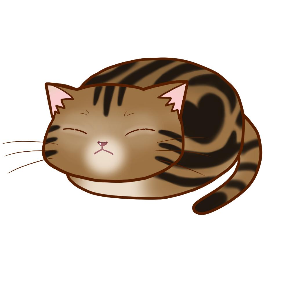 まんじゅうアメショブラウンタビー全身B-Manju cat amesho browntabby whole body B-