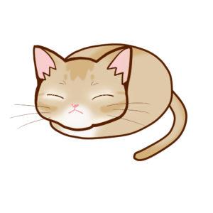 まんじゅうアビフォーン全身B-Manju cat aby fawn whole body B-