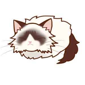 まんじゅうラグドール全身B-Manju cat ragdoll whole body B-