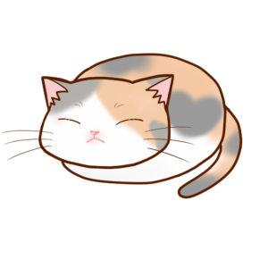 まんじゅう三毛 ダイリュート全身B-Manju cat dilute calico whole body B-