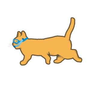 夏猫オレンジシュノーケル