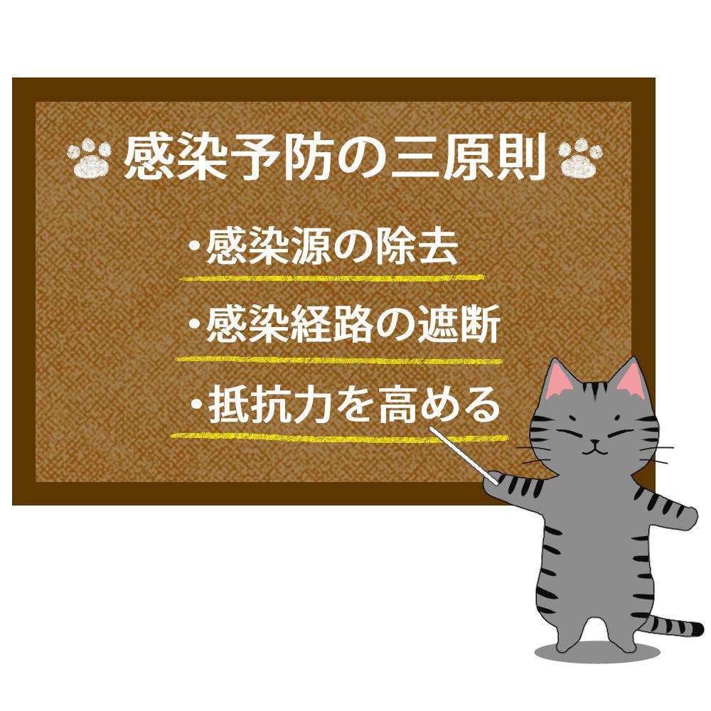 猫イラストシチュエーションサバトラ猫が教える感染予防の三原則