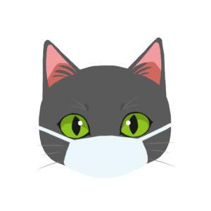 マスクをつけた猫グレー正面