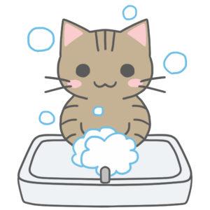 洗面台で手を洗う猫キジトラ