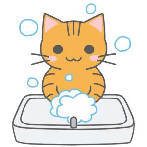 洗面台で手を洗う猫茶トラ