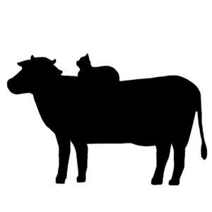 牛の背中に座る猫のシルエット