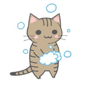 手を洗う猫(全身)キジトラ
