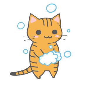 手を洗う猫(全身)茶トラ